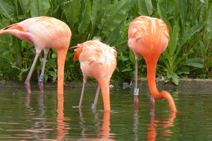 What the flamingos taught us in 2020